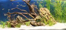 Aquarien-unserer-Ausstellungen_11