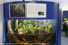 Aquarien-unserer-Ausstellungen_02
