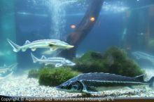 Aquarien-unserer-Ausstellungen_12
