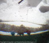 06-Eistauchen-Hallo-da-oben