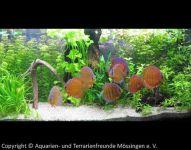 Aquarium_Kunzmann_05