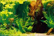Aquarium_Kunzmann_02