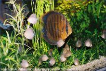 Aquarium_Kunzmann_07
