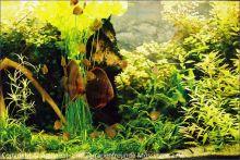 Aquarium_Kunzmann_06