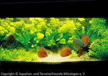 Aquarium_Kunzmann_03