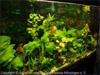 Aquarium_Schauber_12