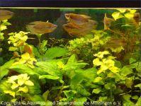 Aquarium_Schauber_13