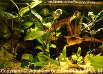 Aquarium_Schauber_03