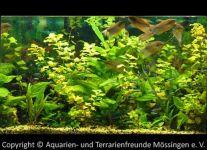Aquarium_Schauber_11