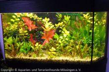 Aquarium_Schauber_01