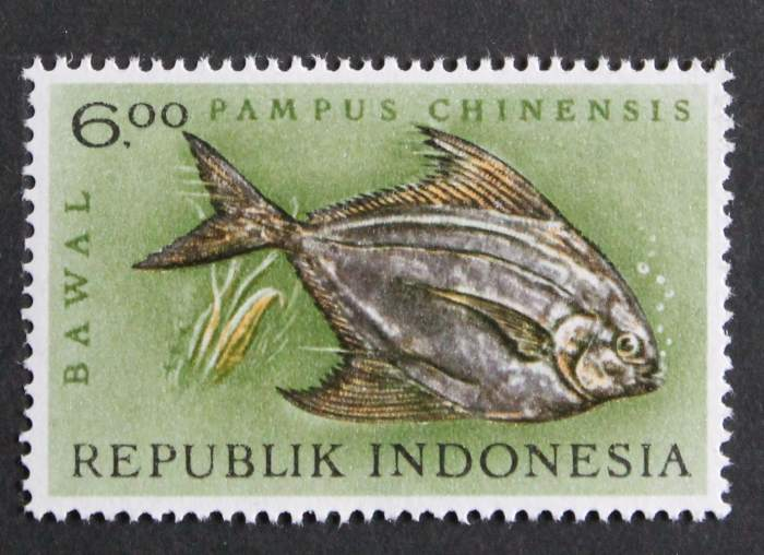 Pampus_chinensis_INDONESIEN.jpg