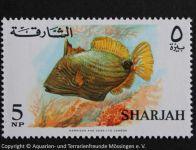 3_SHARJAH