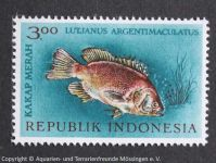 Jutjanus_argentimaculatus_INDONESIEN