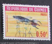 Aphyosemion_coeruleum_GUINEA
