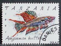 Aphiosemion-bivittatum_TANZANIA