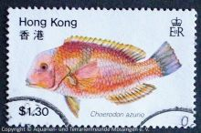 Choerodon-azurio_HONGKONG