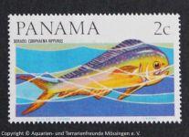 Coriphaena_hippurus_PANAMA