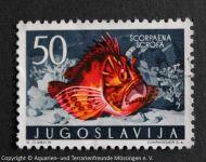 Scorpaena_scrofa_JUGOSLAWIEN