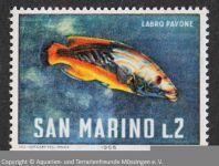 Lippfisch_SAN-MARINO