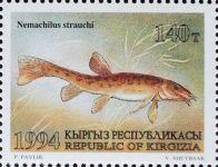 Neomachilus-strauchi_KIRGISIEN