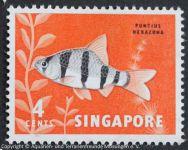 Puntius_hexazona_SINGAPUR