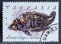 Lamprologus-calvus_TANZANIA
