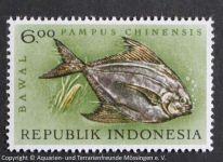 Pampus_chinensis_INDONESIEN
