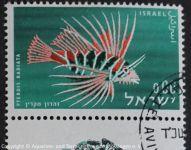 Pterois_radiata_ISRAEL