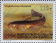 Glyptosternum_reticulatum_KIRGISIEN
