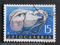 Argonauta_argo_JUGOSLAWIEN