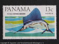 Istiophorus_americanus_PANAMA