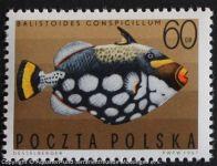 Leopard-Drueckerfisch_POLEN