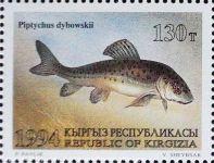 Piptychus-dybowskii_KIRGISIEN
