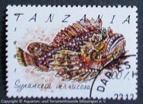 Synanceia-verrucosa_TANZANIA