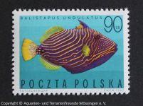Balistatus_undulatus_POLEN