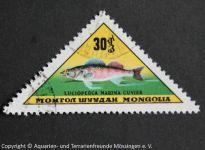 Lucioperca_marina_MONGOLEI