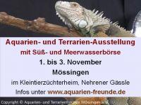 aquarienfreunde-moessingen3