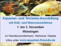 aquarienfreunde-moessingen2