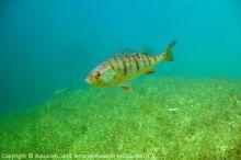 Unterwasserwelten_02