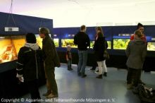 1-Ausstellung