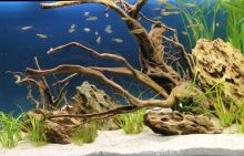 3-Aquarien