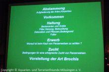 1_Vortrag_Panzerwelse