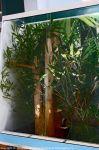 Regenwaldtage_3_09